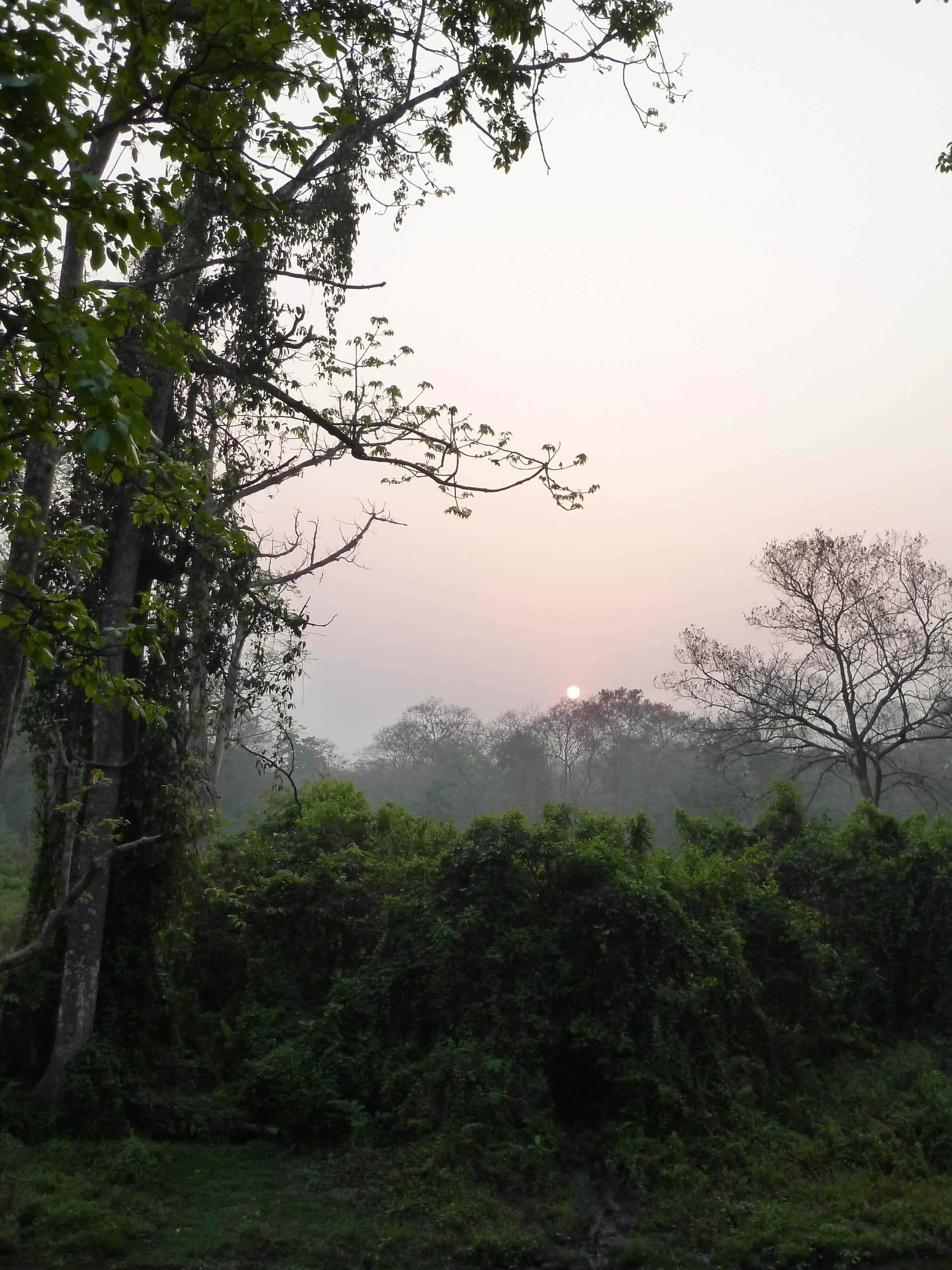Early morning in the Jungle, Jaldapara