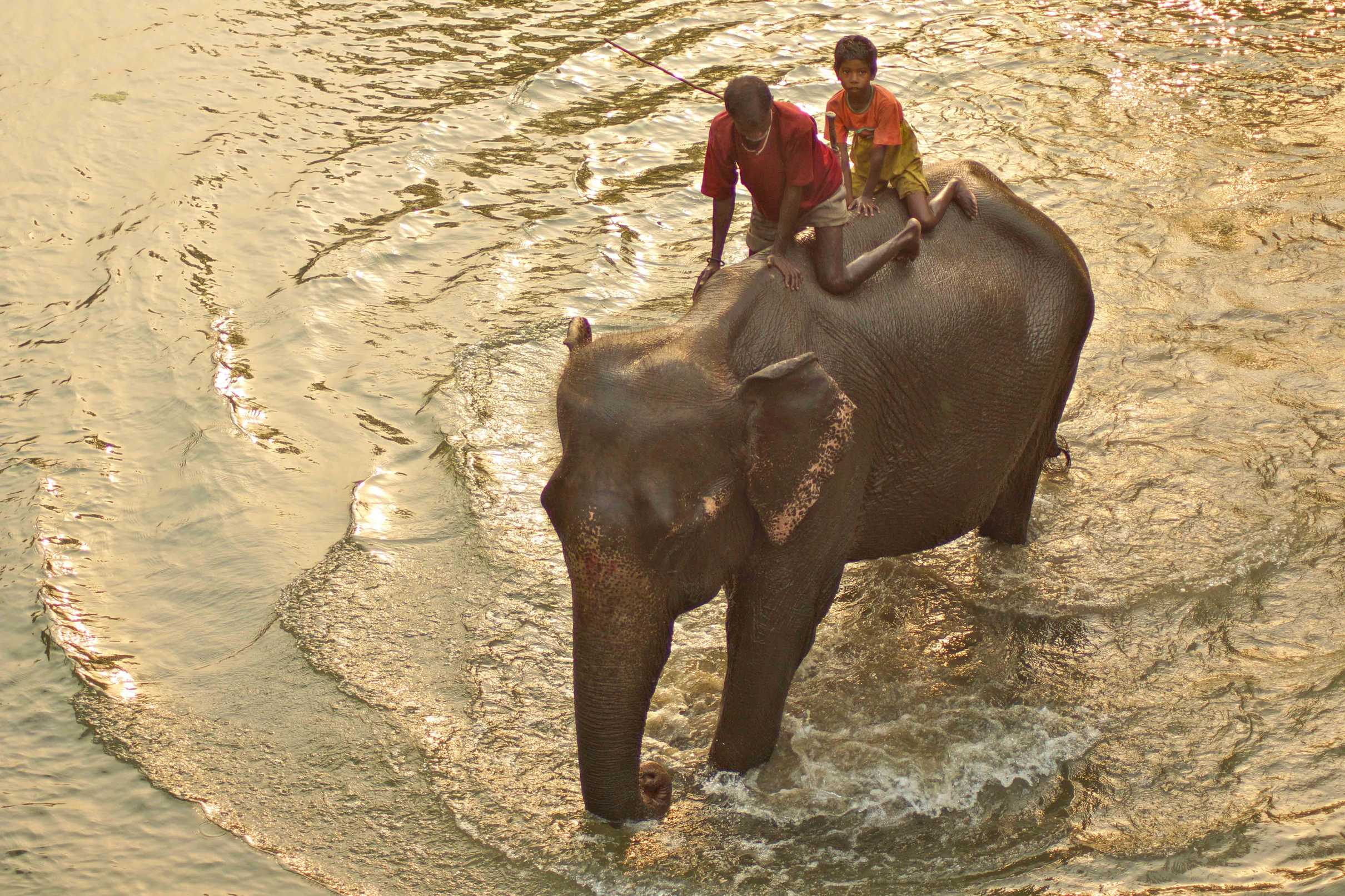 Work elephant and Mahout